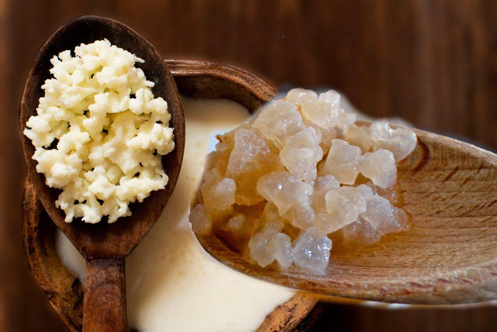 kefir de leche vs kefir de agua